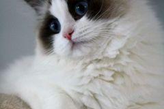 16hermione